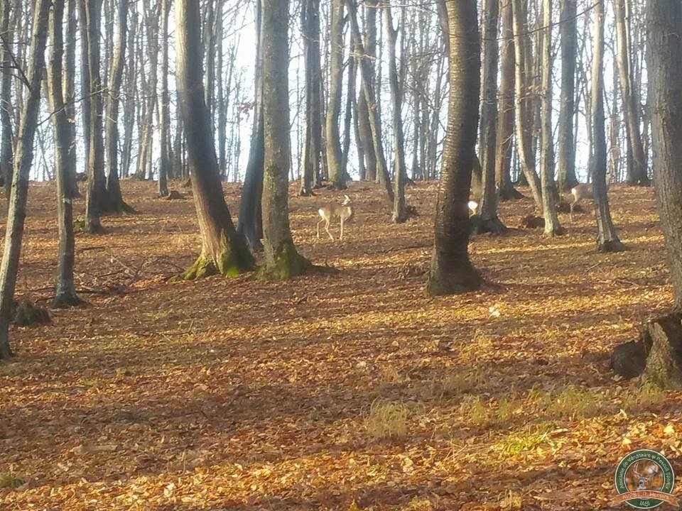avps-lr-hunters-borosesti_11-19