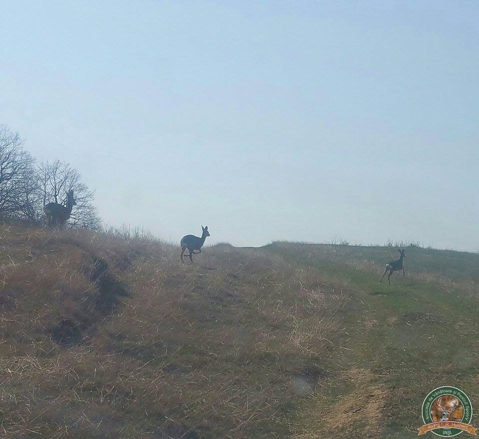 avps-lr-hunters-borosesti_11-37