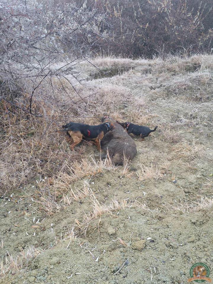 avps-lr-hunters-borosesti_11-5