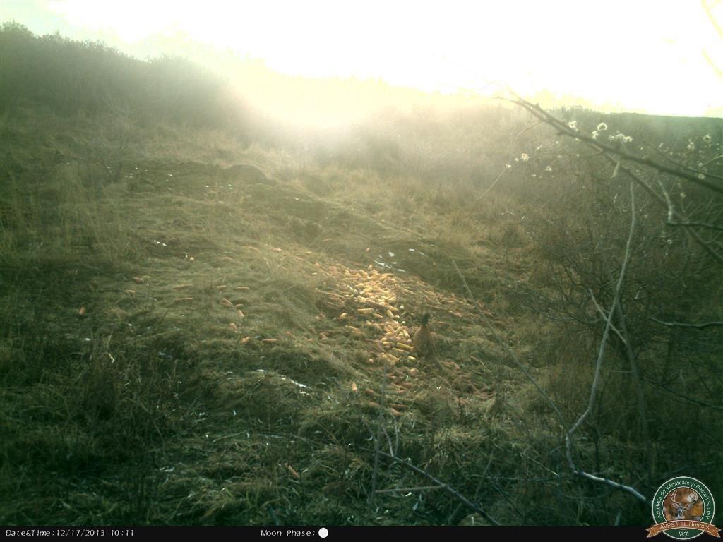 avps-lr-hunters-borosesti_11-62