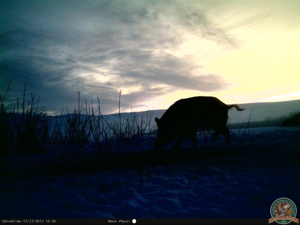 avps-lr-hunters-borosesti_11-71