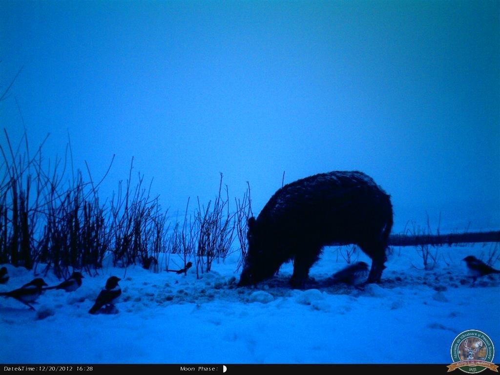 avps-lr-hunters-borosesti_11-72