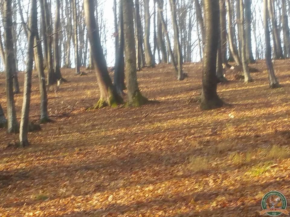 avps-lr-hunters-borosesti_11-8