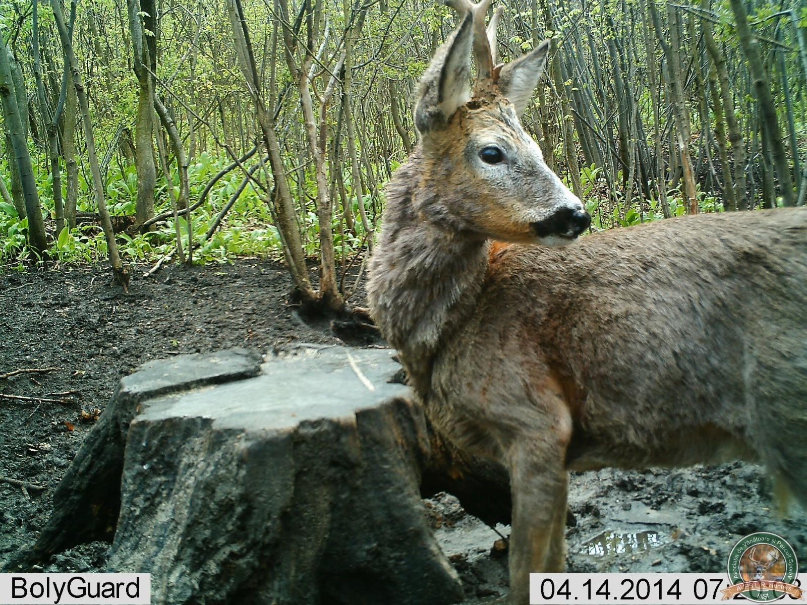 avps-lr-hunters-crasnita_48-3
