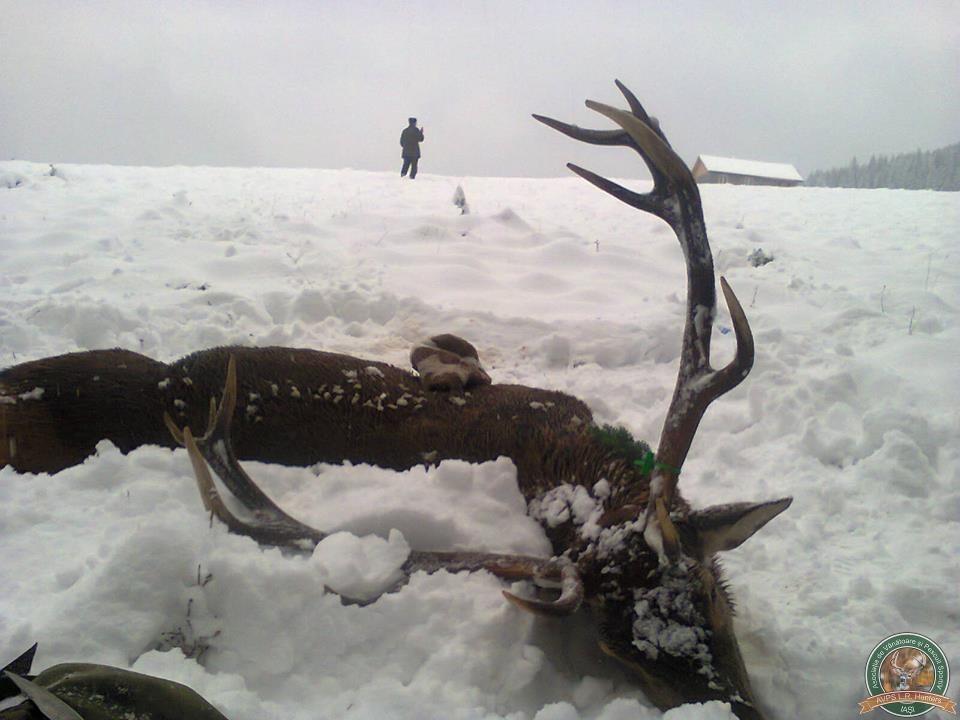 avps-lr-hunters-dragosa_25-24
