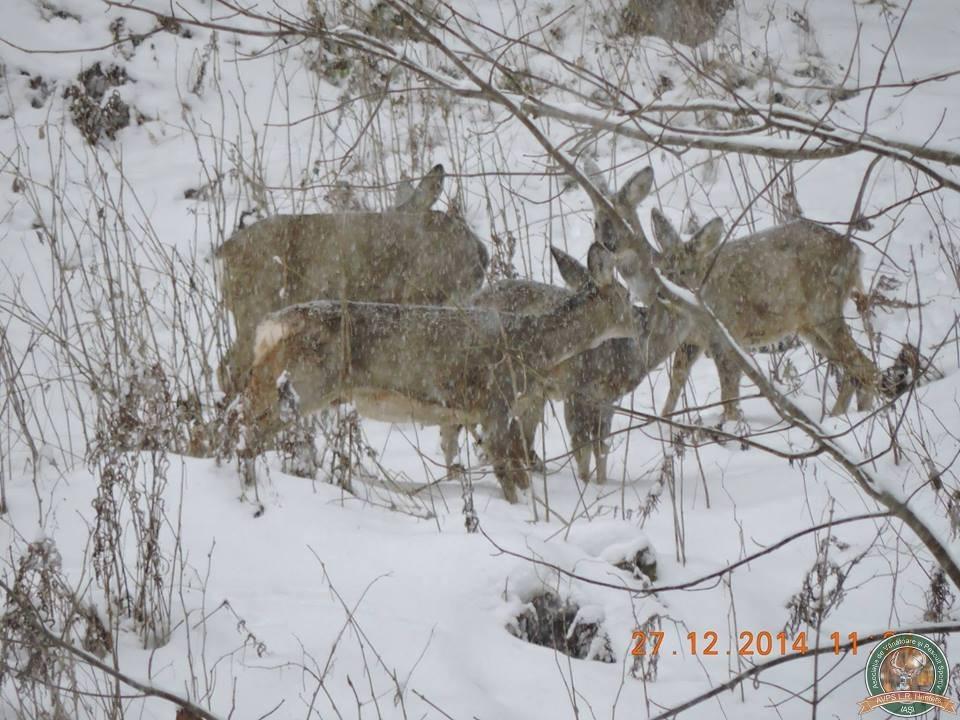 avps-lr-hunters-dragosa_25-30