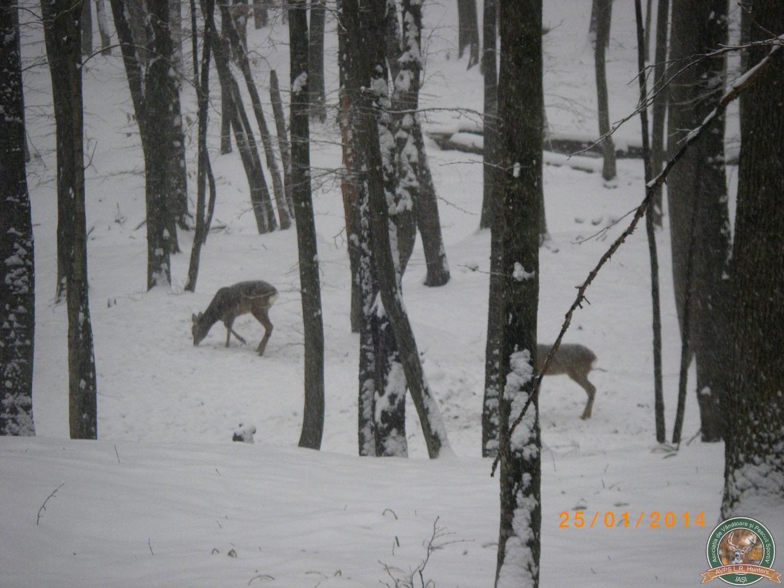 avps-lr-hunters-garceni_4-36