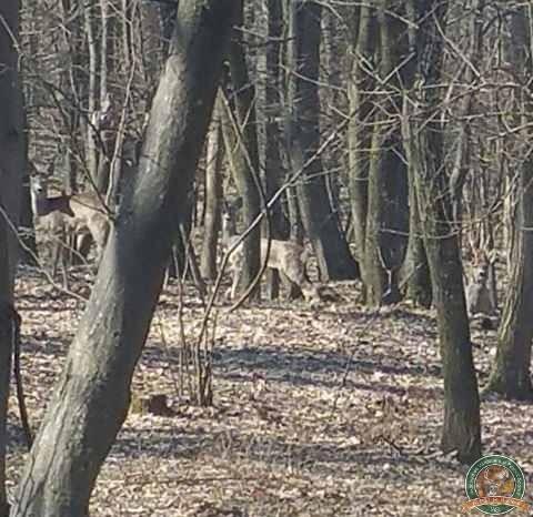 avps-lr-hunters-lepsa_20-24