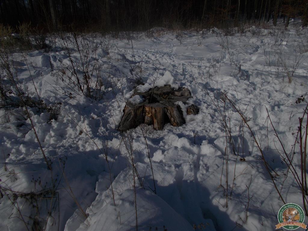 avps-lr-hunters-liteni_60-38