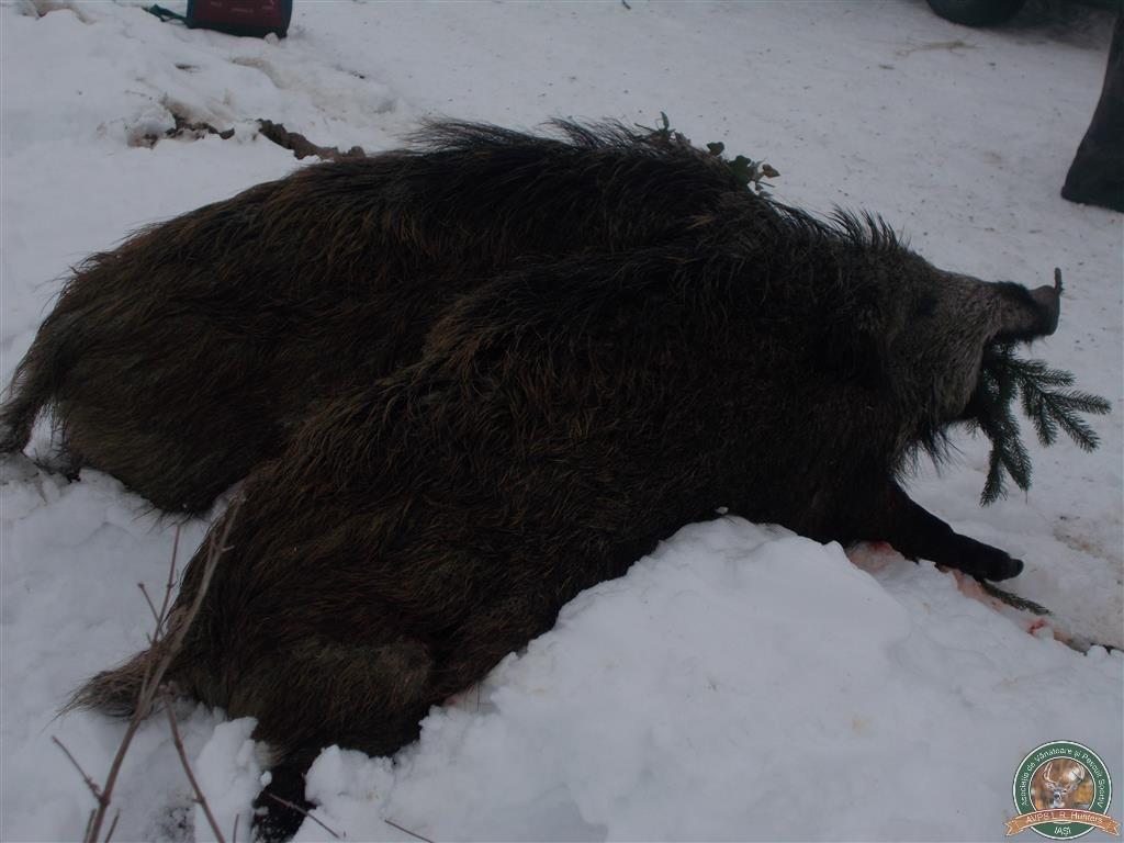avps-lr-hunters-liteni_60-42