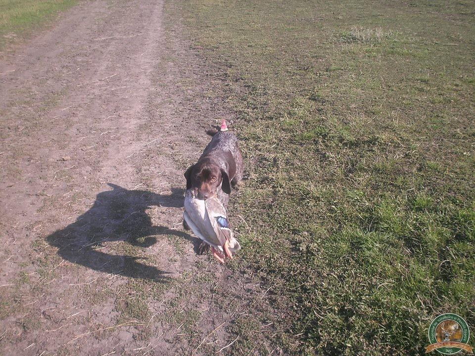 avps-lr-hunters-stauceni_11-1