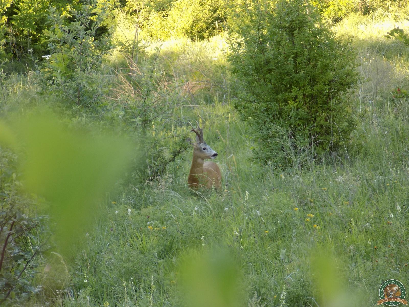 avps-lr-hunters-turia_22-5