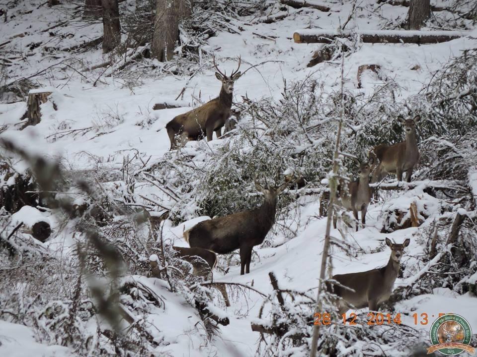 avps-lr-hunters-iarna-la-vanatoare-0