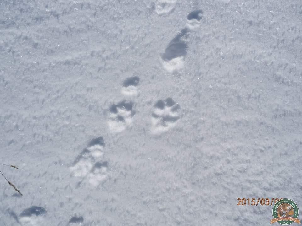 avps-lr-hunters-iarna-la-vanatoare-10