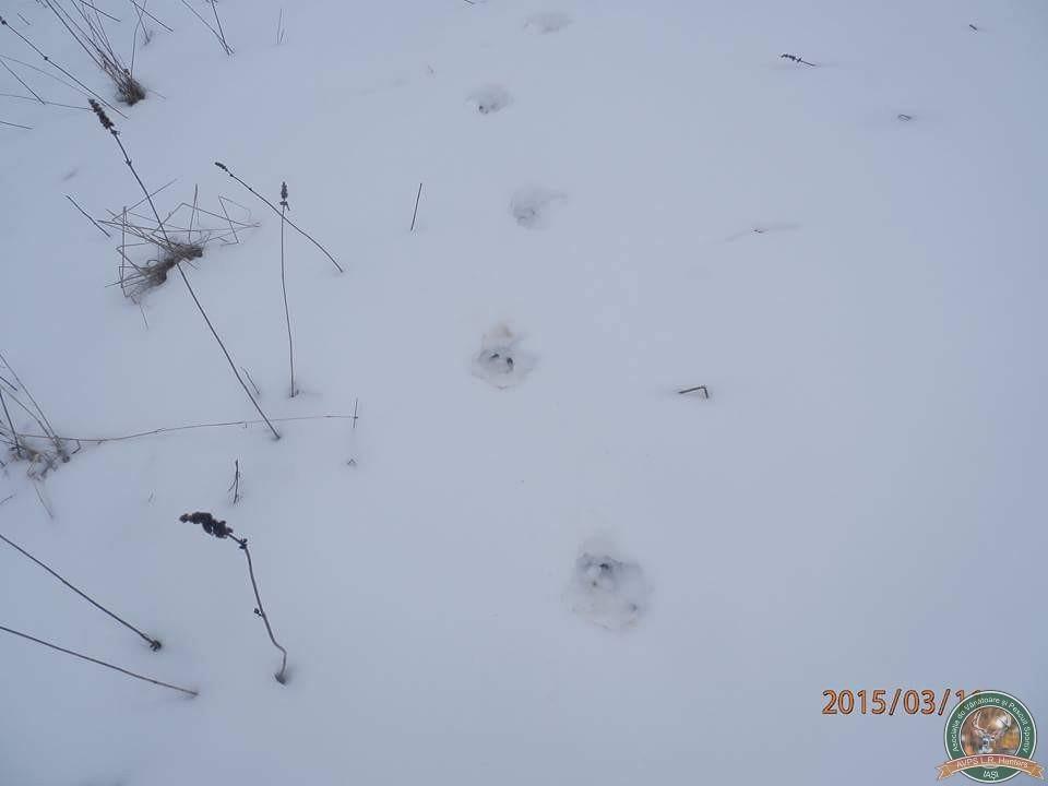 avps-lr-hunters-iarna-la-vanatoare-11