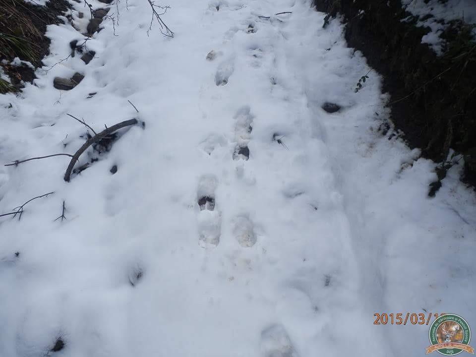 avps-lr-hunters-iarna-la-vanatoare-13