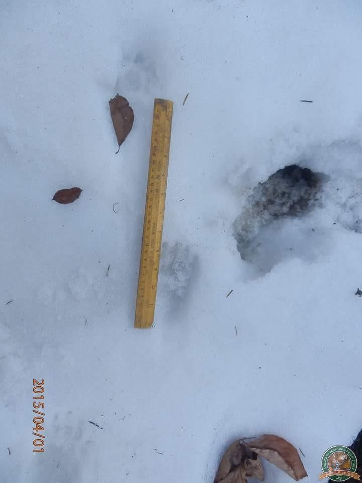 avps-lr-hunters-iarna-la-vanatoare-14