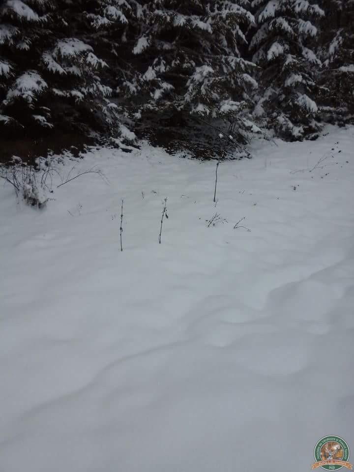 avps-lr-hunters-iarna-la-vanatoare-15