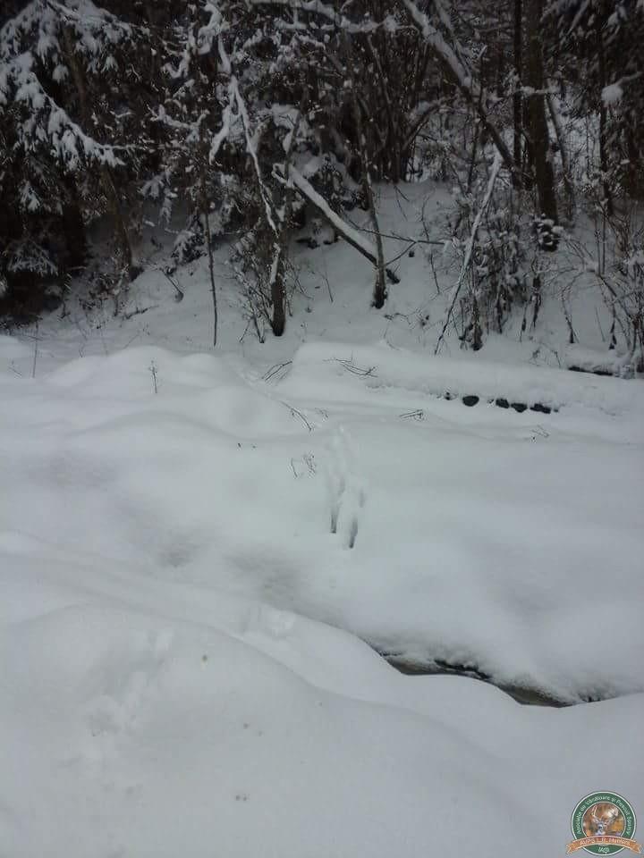 avps-lr-hunters-iarna-la-vanatoare-16