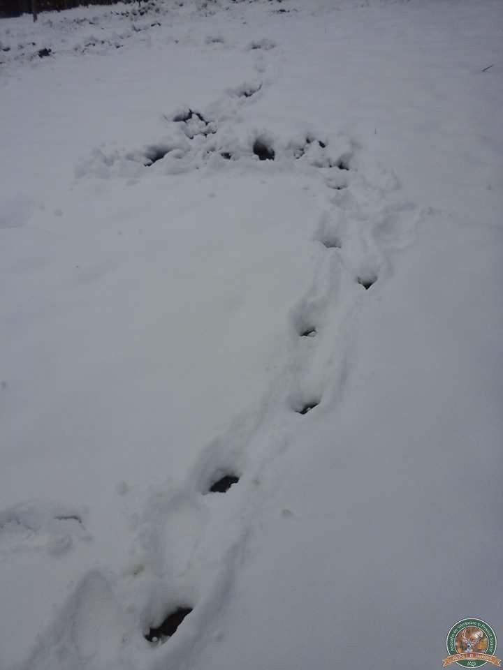 avps-lr-hunters-iarna-la-vanatoare-19