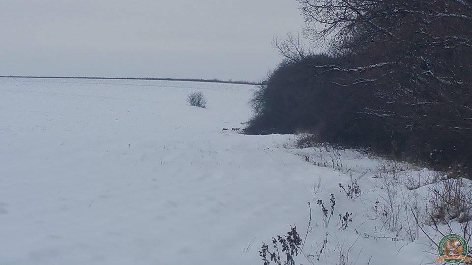 avps-lr-hunters-iarna-la-vanatoare-21