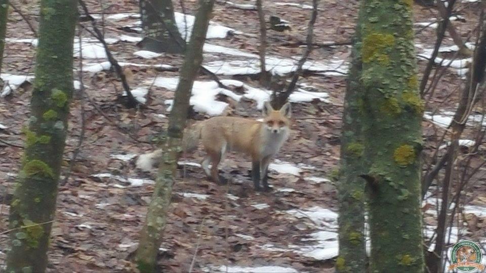 avps-lr-hunters-iarna-la-vanatoare-22