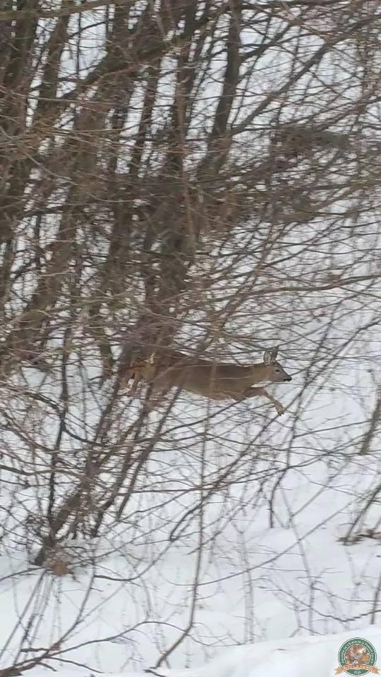avps-lr-hunters-iarna-la-vanatoare-23