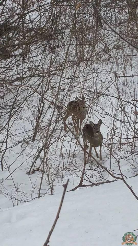 avps-lr-hunters-iarna-la-vanatoare-24