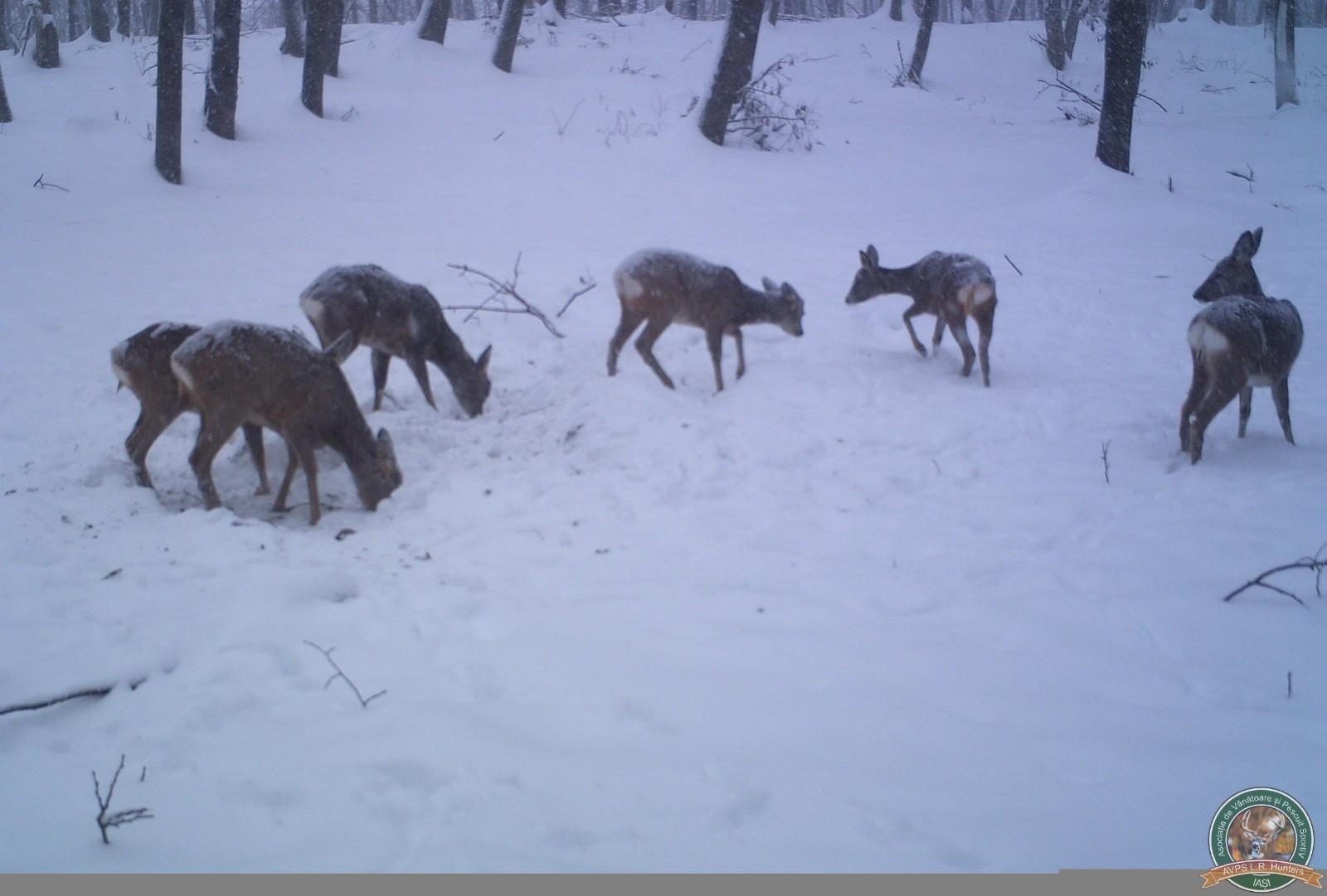 avps-lr-hunters-iarna-la-vanatoare-25
